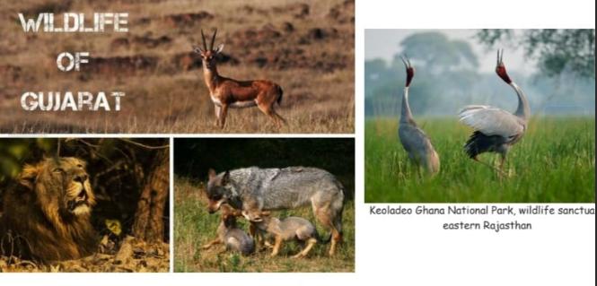 Wildlife of Northwestern India