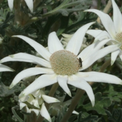 Seasonal Blooms – October